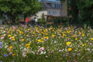 Blühwiese in Lütjensee - Juni 2021; ©U. Stentzler